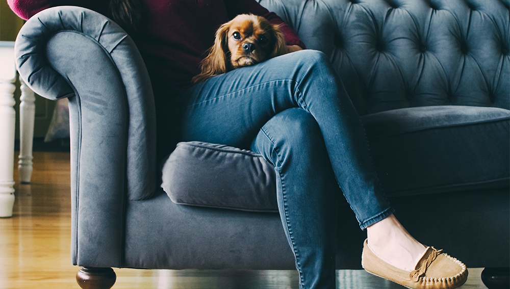 Woman sitting on a sofa with a dog on her lap