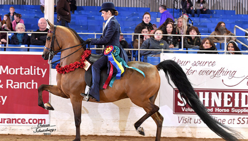 Katherine and Shenanigan competing in an equestrian championship